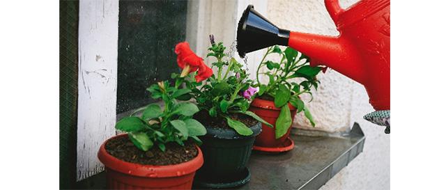 観葉植物の疑問に答えます