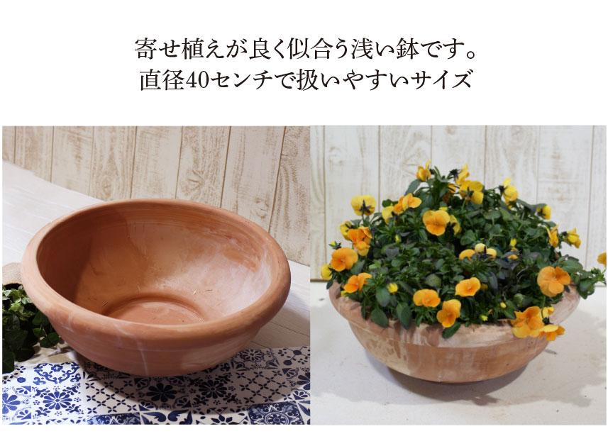 トスカーナ【チオトラ・リスチオ40】